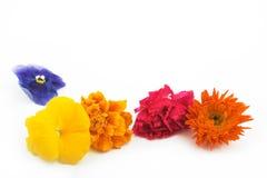 линия цветков Стоковое Изображение RF