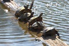 линия черепахи Стоковые Фотографии RF