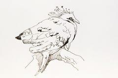 Линия чертеж чернил искусства тропической птицы Goura Виктории сидя дальше Стоковое фото RF