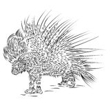 Линия чертеж Crested дикобраза Стоковое Изображение RF