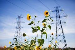 Линия электропередач на голубом небе с желтым цветком Стоковое Фото