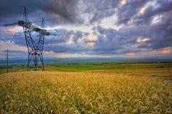 Линия электропередач в пшеничном поле Стоковое Изображение RF