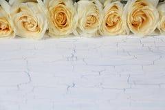 Линия rosebuds на белой предпосылке Стоковое Изображение RF