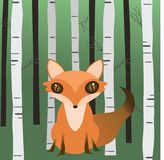 Лиса в древесинах стоковое фото