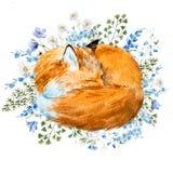 Лиса спать акварели Стоковая Фотография