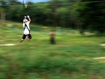 лисица летания стоковое фото rf