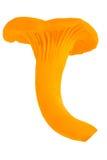 Лисичка Стоковое Изображение RF