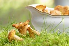 Лисички в шлюпке мха и подливки для ragout гриба Стоковые Фотографии RF