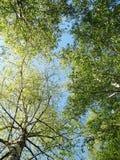 листает весна неба Стоковое Изображение RF