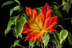 Листает листва стоковое фото