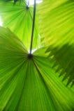листает тропическо Стоковая Фотография