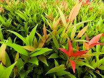 Листайте с смешанными желтым цветом и красным цветом зеленого цвета цвета Стоковое Изображение