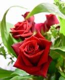 Листва букета цветка красных роз романтичная стоковое изображение