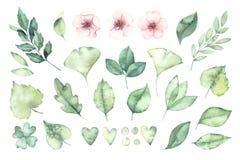 Листва весны изображение иллюстрации летания клюва декоративное своя бумажная акварель ласточки части Ботаническое собрание  иллюстрация вектора