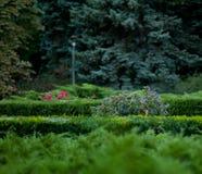 Листва в парке Стоковые Изображения RF