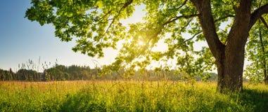 Листва дерева в свете утра Стоковые Изображения RF