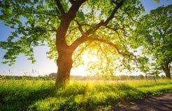 Листва дерева в свете утра Стоковая Фотография