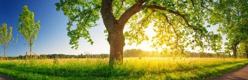 Листва дерева в свете утра Стоковые Фотографии RF