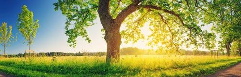 Листва дерева в свете утра Стоковое Изображение