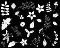 Листва зимы с белыми цветками и листьями Иллюстрация вектора