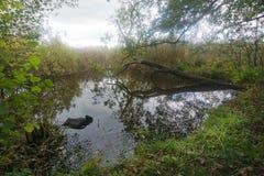 Листва и болото леса стоковые изображения rf