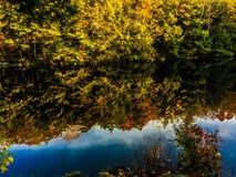 Листва на парке штата пруда заусенца стоковое изображение