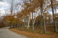 Листва осени Вермонта сценарная Стоковое Фото
