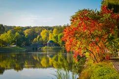 Листва осени, ветви дерева клена против озера и небо зеленый цвет дня выходит солнце парка солнечный Стоковые Фото