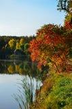 Листва осени, ветви дерева клена против озера и небо зеленый цвет дня выходит солнце парка солнечный Стоковое Изображение RF