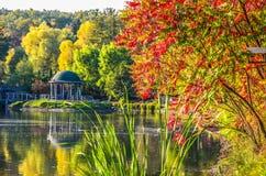 Листва осени, ветви дерева клена против озера и небо зеленый цвет дня выходит солнце парка солнечный Стоковое фото RF