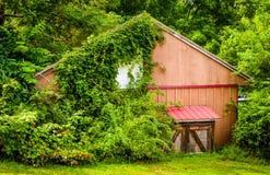 Листва покрывая старый сарай в сельском York County, Пенсильвании Стоковое фото RF