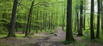лиственная предыдущая стойка весны стоковое фото rf