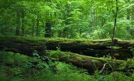 лиственная свежая стойка весеннего времени Стоковая Фотография