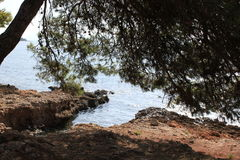 Лиственница на seashore Стоковое фото RF