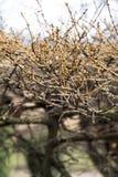 Лиственница разветвляет весной в парке Стоковое фото RF