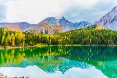 Лиственницы осени озера Честер Стоковое Фото