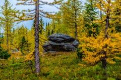 Лиственницы осени озера Честер Стоковые Изображения RF