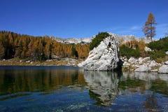 Лиственницы Dolina Triglavskih Jezer осени Triglav NP стоковая фотография rf
