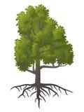 Лиственное дерево иллюстрация штока