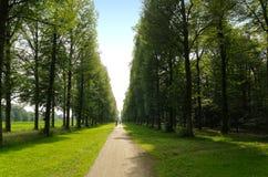 лиственное лето путя пущи прямое очень Стоковые Изображения RF