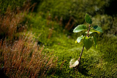 Лиственное лиственное дерево Стоковое Изображение