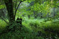 лиственно немногая взгляд лета потока стойки стоковое фото rf