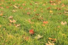 лиственно стоковое фото
