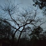лиственно стоковое изображение