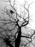Лиственные деревья и небо в черно-белом режиме Стоковая Фотография
