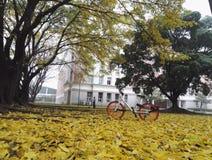 Лиственные листья после дождя стоковые изображения rf