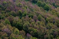 Лиственный лес в цветах осени Сезонное изменение воздержательное для Стоковые Фото