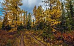 Лиственный лес осени Стоковые Фотографии RF