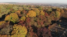 Лиственный лес вокруг получившейся отказ крепости видеоматериал