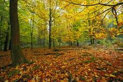 Лиственный лес детали стоковое изображение rf